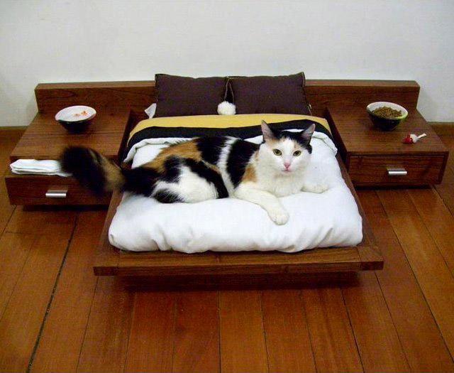 mobilier-pentru-animalele-de-companie