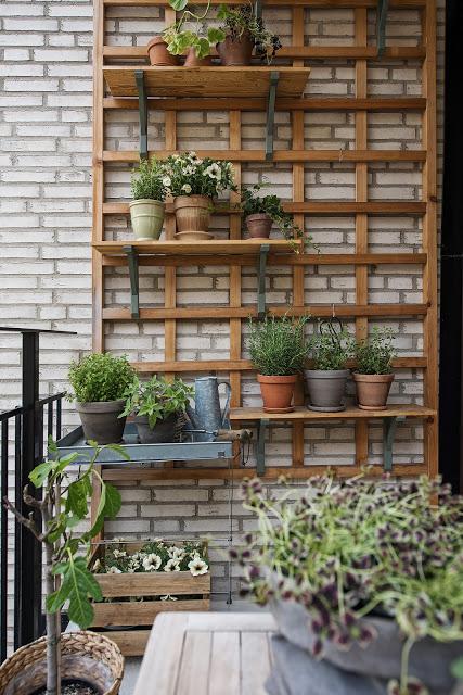 idee de asezare plante pe balcon