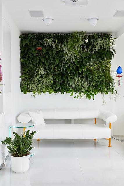 perete vegetal in living