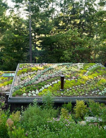 ce-sunt-acoperisurile-verzi-si-cine-va-poate-instala-sistem-romania